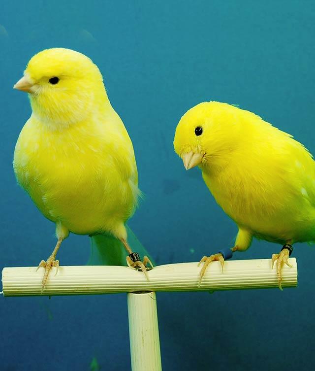 productos_nacionales_aves