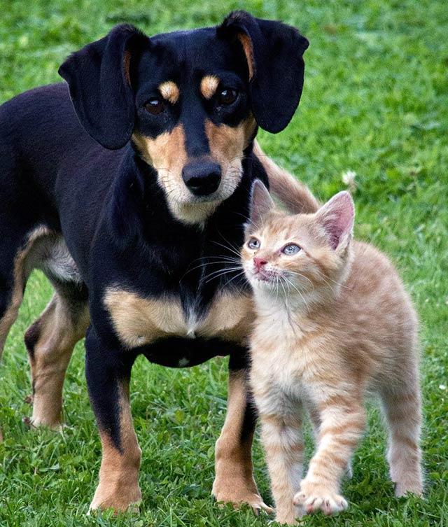productos_nacionales_perros-gatos