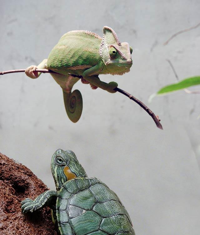 productos_nacionales_reptiles-tortugas