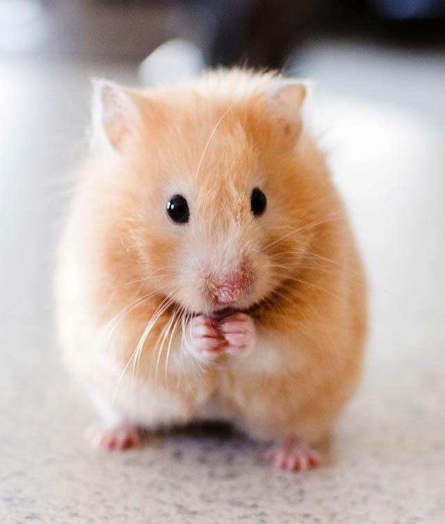 productos_nacionales_roedores